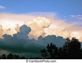 various types and colors of clouds fill the sky with trees in multi layered clouds with silhouettedtrees along the bottom