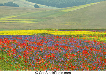 multicolor, campos, con, flores salvajes, en, piano, grande,...