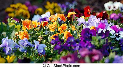 multicolor, flores violetas