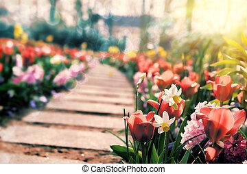 Multicolor flowers in sprig park
