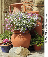 multicolor lobelia flowers in terracotta  vintage vases,Tuscany, Italy, Europe