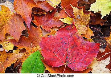 multicolor, piso bosque