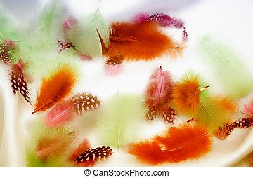 multicolor, plumas