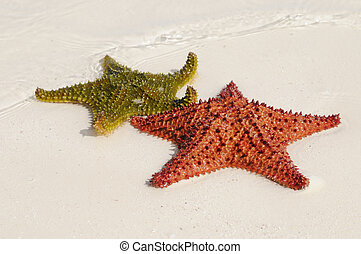 Multicolor starfishes - Two starfishes in green and orange...