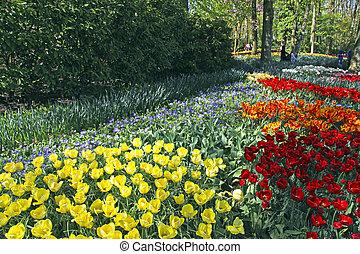 multicolor, tulipanes, en el parque, países bajos