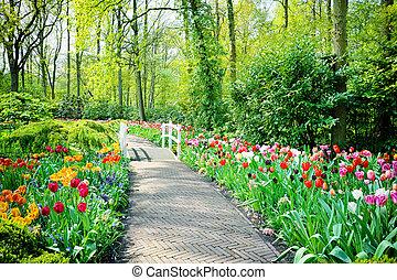 multicolor, tulipanes, en, keukenhof, jardines