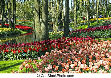 multicolor, tulipanes, en, primavera, países bajos