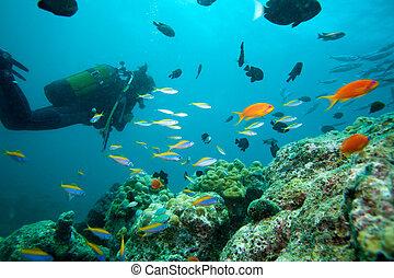 multicolor, vida, arrecife