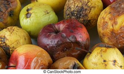 multicolore, arrière-plan., pourri, mûri, pommes, gâté, ...