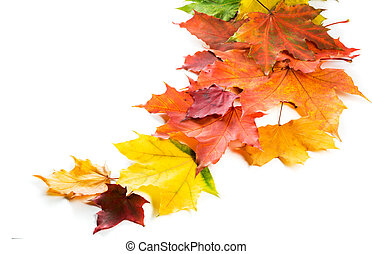 Multicolored autumn maple leaves arranged in a row.