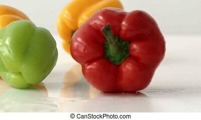 Multicolored Bulgarian pepper falls on a white wet surface in a slow motion