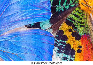 Multicolored butterflies wing