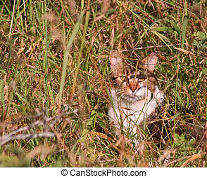 Multicolored cat in the tall grass