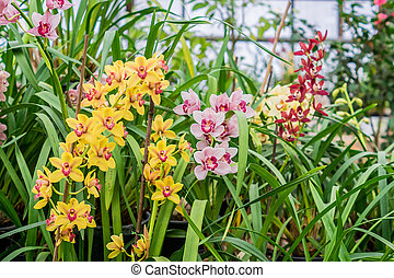multicolored exotic orchid flowers in botanical garden