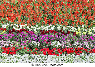 Multicolored flowerbed