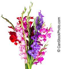 multicolored flowers gladiolus isolated on white background