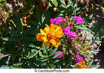 Multicolored flowers in a bed of green leaves