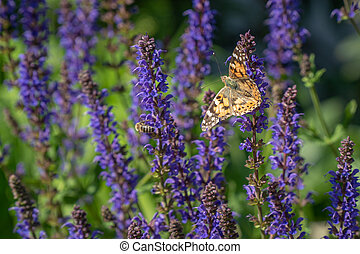 Multicolored flowers on green meadow in forest. Flying bees and butterflies complements the beauty and diversity of nature
