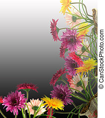 Multicolored Gerbera flowers in a vase,