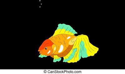 Multicolored Goldfish Floating in Aquarium Alpha Matte -...