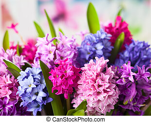 Multicolored hyacinths - Group of beautiful multicolored...
