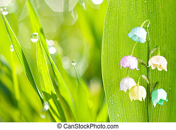 multicolored lily of the valley, on green background