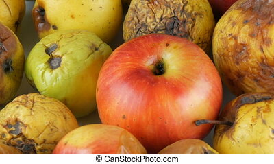 Multicolored rotten spoiled ripened apples and one ripe...