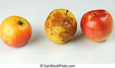 Multicolored rotten spoiled ripened apples and ripe apple on...