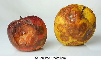 Multicolored rotten spoiled ripened apples on a white...