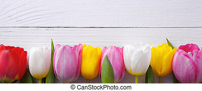 Multicolored tulips in a row on a background of light boards.