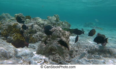 Slow motion shot of different exotic fishes swiming near the coral reef.