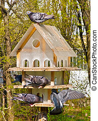 Multistoried house for the birds