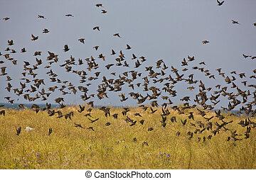 multitud, aves
