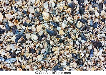 multitud, conchas marinas, pequeño