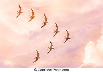 multitud, de, gaviotas, moscas, en, un, jamb, en, el, forma,...