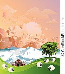multitud, sheep, pasto, amanecer