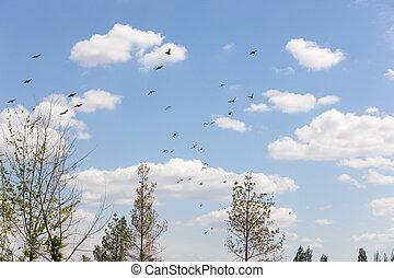 multitud, starlings