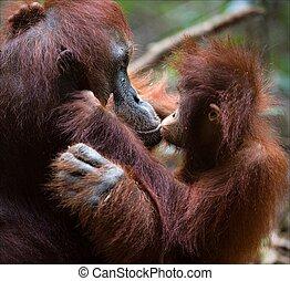 mum., 接吻