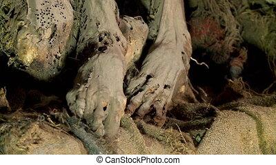 Mummified Feet At Coquesa Cemetery, Uyuni, Bolivia - Extreme...