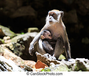 Mummy monkey with a child