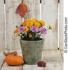 Mums Flowers And A Pumpkin