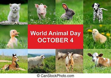 mundo, animal, día