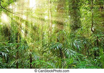 mundo, floresta tropical, dorrigo, luz solar, herança
