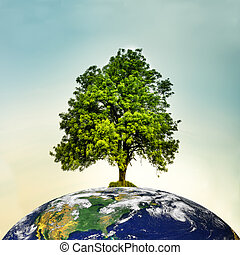 mundo, topo, árvore