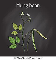Mung bean Vigna radiata with leaves and pods