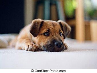 munter, junger hund