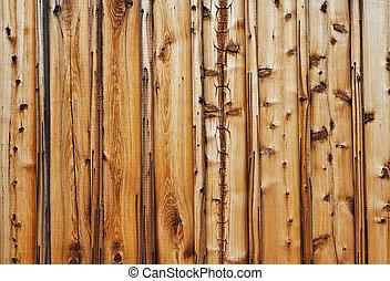 mur, épineux, bois