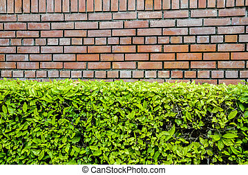 mur, brun, plante, vert