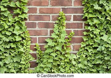 mur, croissant, brique, haut, lierre