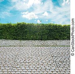mur, feuille verte, fond, ciment